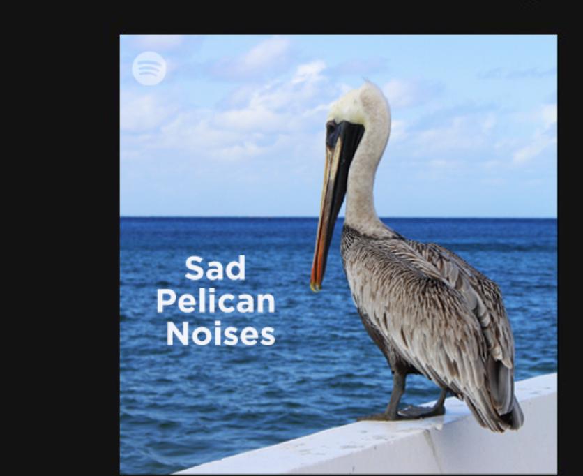 国王官方调侃鹈鹕球迷:音乐软件推荐您收听《悲伤的水鸟》