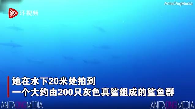 澳大利亚女子潜水时拍到惊人一幕:200多只鲨鱼环绕身边,网友热议:鲨鱼忙着去开会,没空搭理她