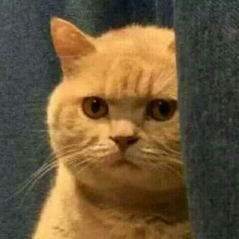 小胖猫1988