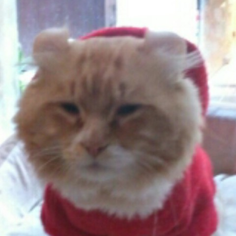 兰色小肥猫