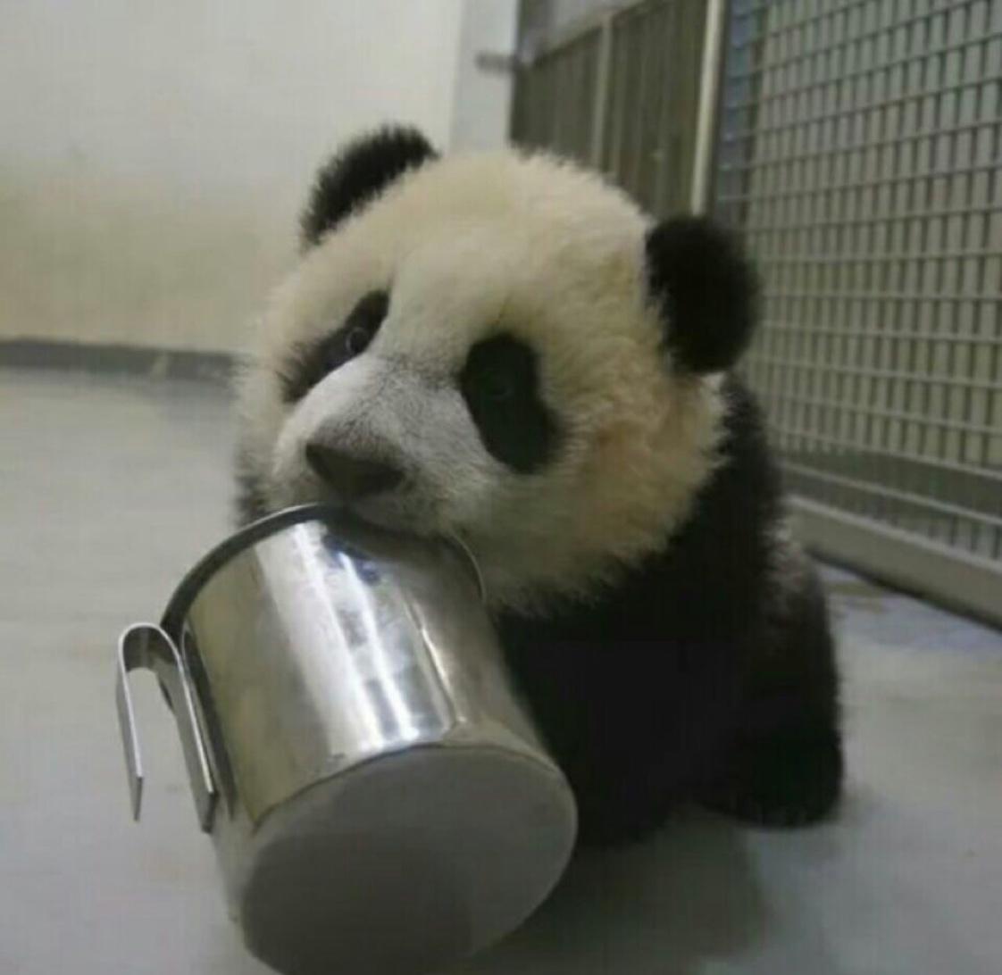 小团子大熊猫
