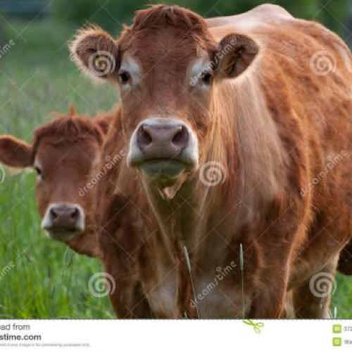 添疯狂的公牛