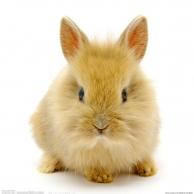 rabbit2012