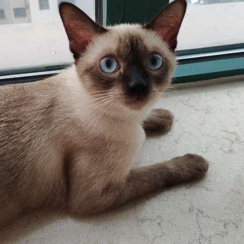 一只描述不清的猫