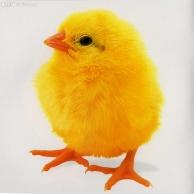 亮我我鸡鸡会变大