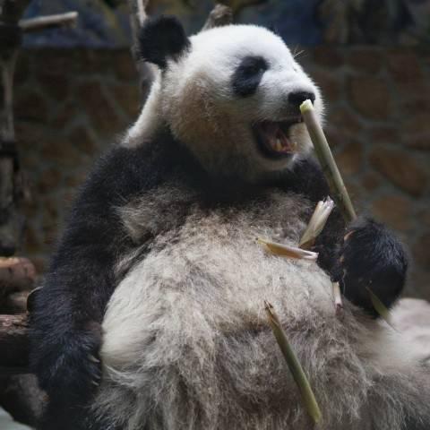 【2016乒超联赛】总决赛热线:女团武汉安心夺