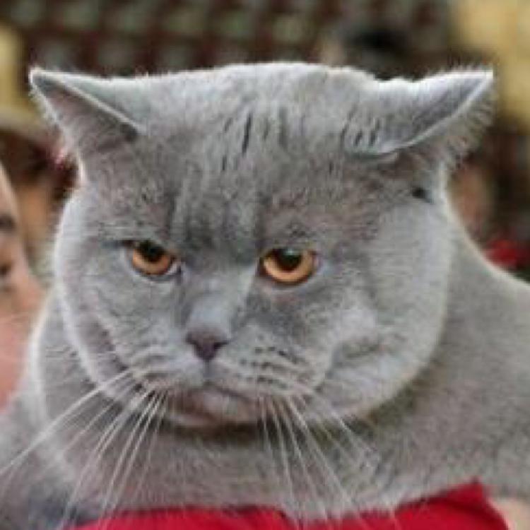 愤怒的大脸猫
