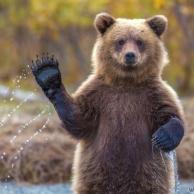 桶狭间之神狂粉我熊