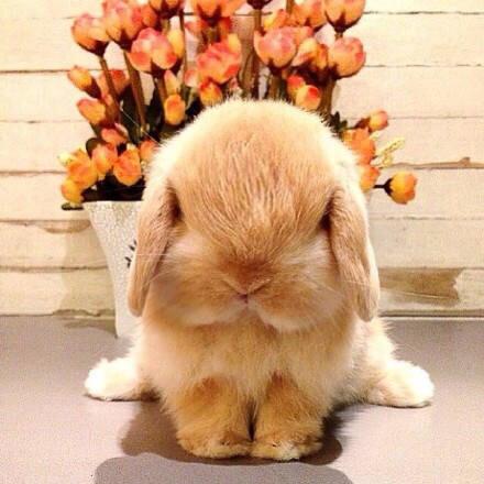 rabbitbear