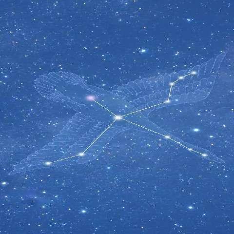 天鹅座十字星