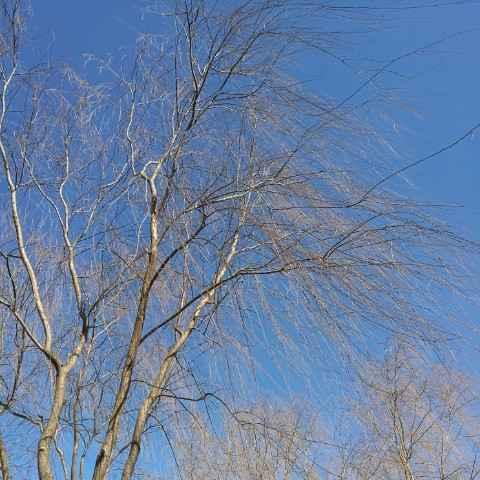蓝蓝的天空欧耶