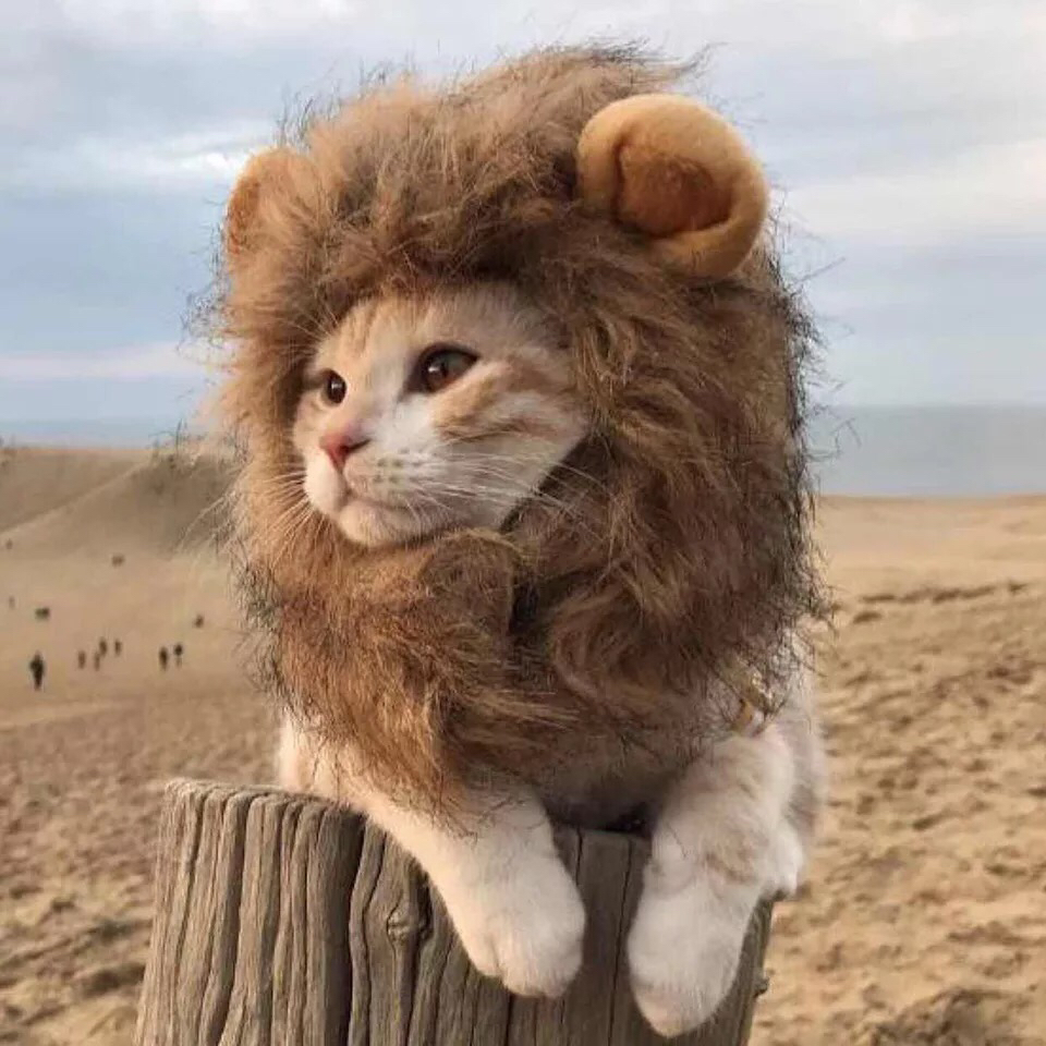 塞维利亚少女狮
