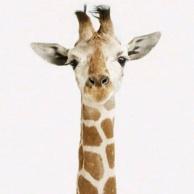 假装是长颈鹿的老王