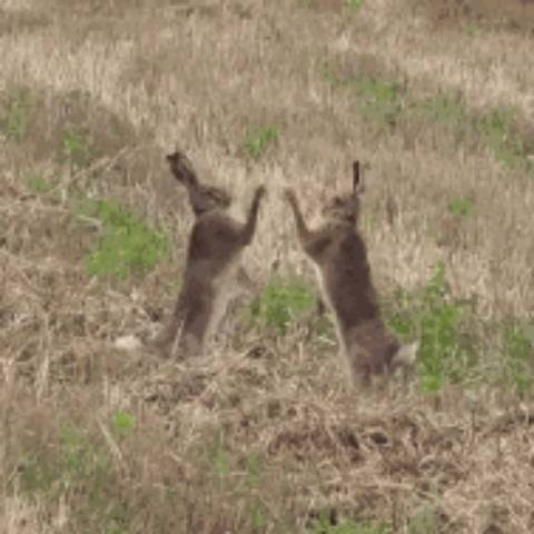 我爱兔兔921