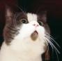 酱油猫的逆袭