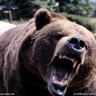 灰熊MMM