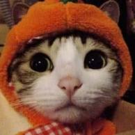 小肥猫布鲁斯