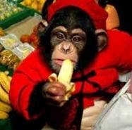 吃香蕉的猩_猩