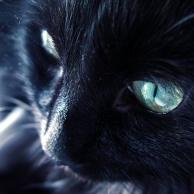 老猫馋小鱼