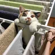 有个小白猫